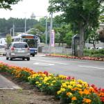 街路花壇が美しい大麻地区【北海道江別市】