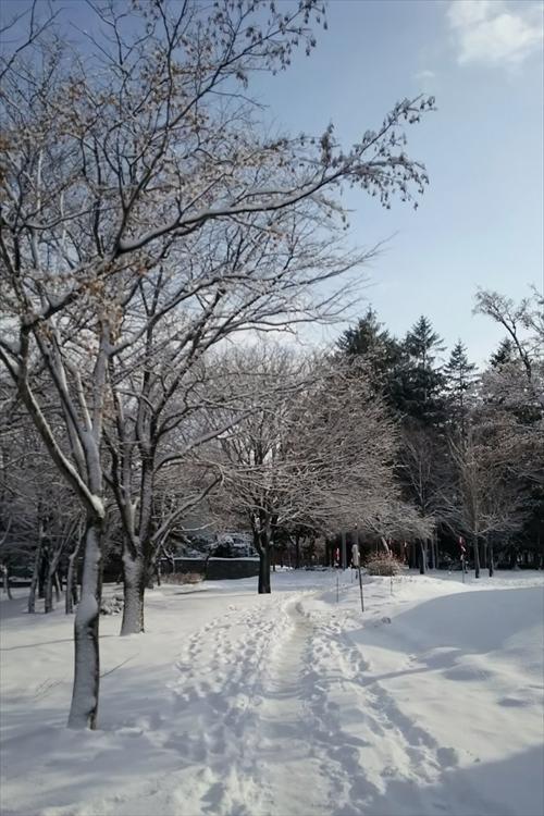 雪のグリーンモール