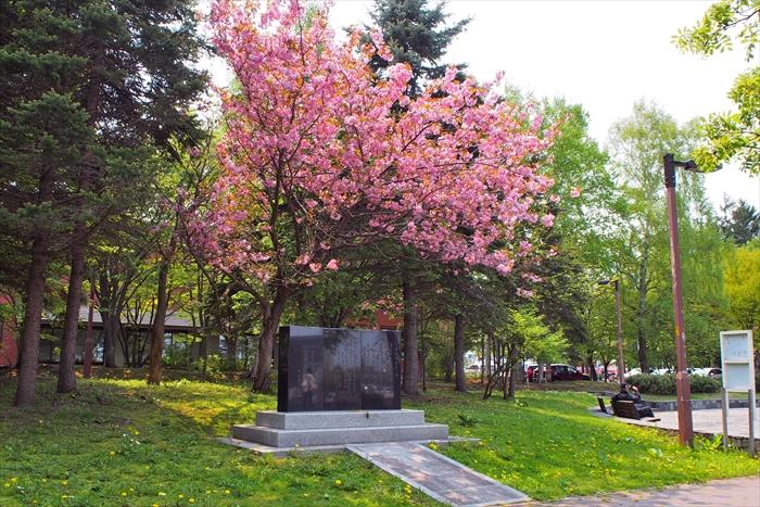 子供盆おどり唄歌碑と桜