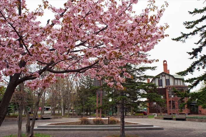 ガラス工芸館と桜