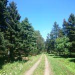 お手軽ハイキング~林木育種場旧庁舎からキャンプ場へ【野幌森林公園】