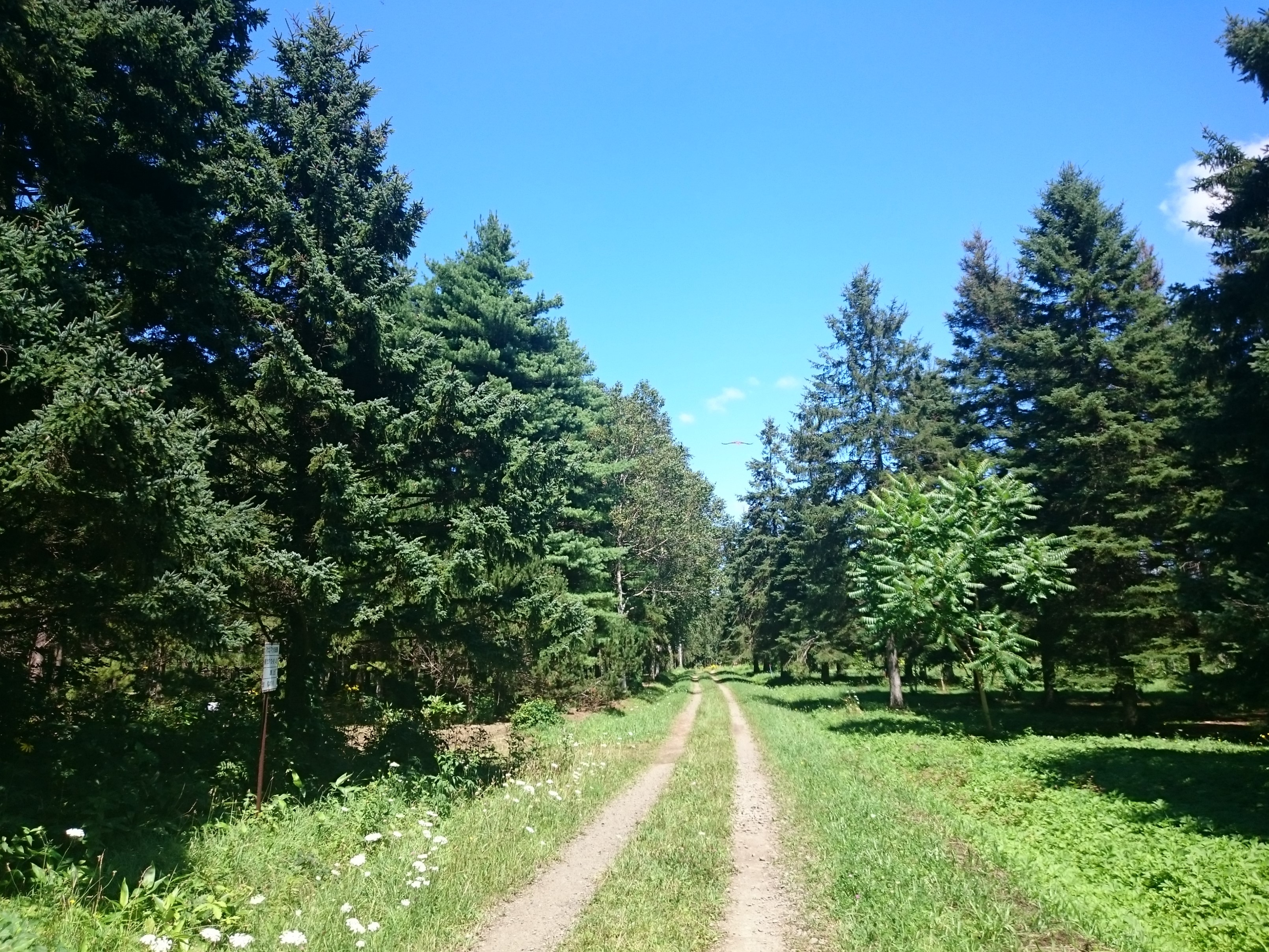 試験林の道