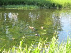 ⑦泉の沼公園2
