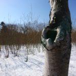 歩こう♪歩こう~♪わたしは病気~🎶「北海道林木育種試験場の道」