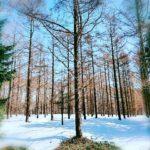 千年先へ続く試験林を歩く《北海道林木育種センター》