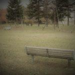 【マニアックリポート】会話の無い夫婦にお勧めRTN2号公園【北海道江別市】