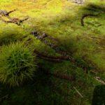 苔スポット情報_「湯川公園」薄暗くジメジメした空間で苔に囲まれる恍惚感【江別市】